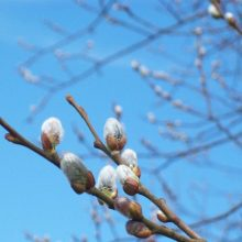 Eye Spy Nature in March