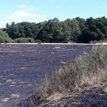 Fire causes devastation to wildlife on the heath