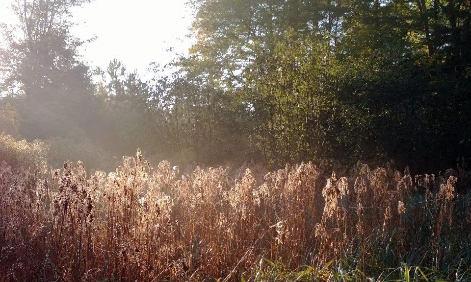 Wetland reedbed