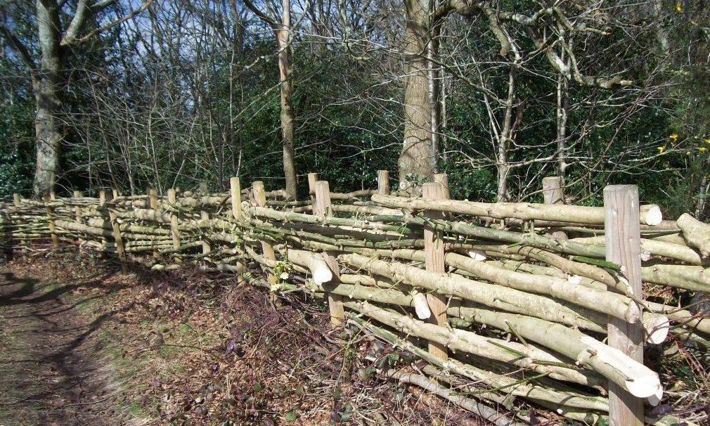 Dry hedging Petersfield Heath
