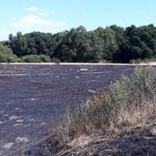 Fire causes devastation to wildlife on the heath